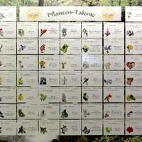 Pflanzen-Talente