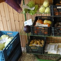 Dorfladen Frischgemüse