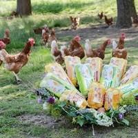 Eier Packungen mit Freilandhühnern