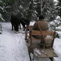Auf dem Weg zur Waldarbeit