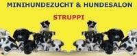 Hundesalon - Struppi , Minihundezucht