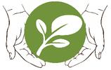 Moringa, der gesunde Weg zum Wohlbefinden.