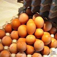 Stadlbauer Eier