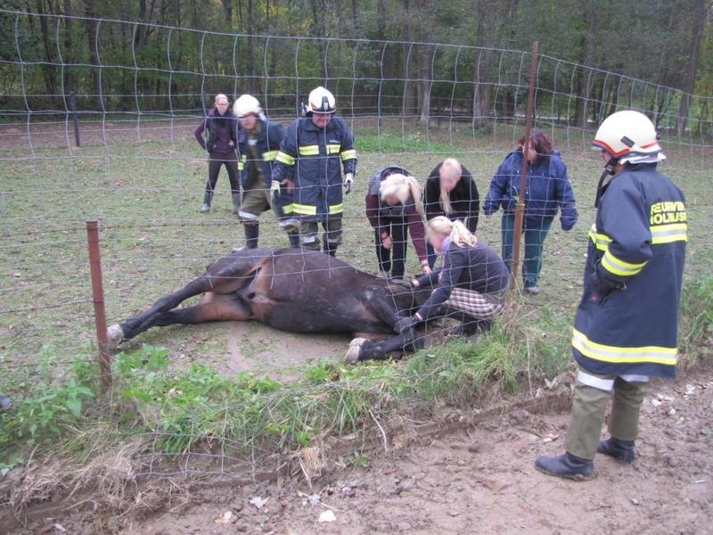 Einsatz: Tierrettung