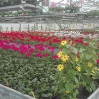 Gärtnerei (3)