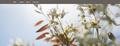 Attraktive Homepages und Accounts Juli