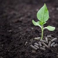 Pello Plant Naturdünger