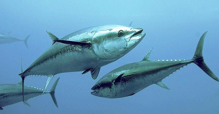 Meeresfische und Schwangerschaft