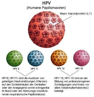 Abstrich zur Humanen Papilloma Virus Typisierung