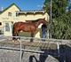 Ist mein Pferd zu dünn? Ist mein Pferd zu dick?