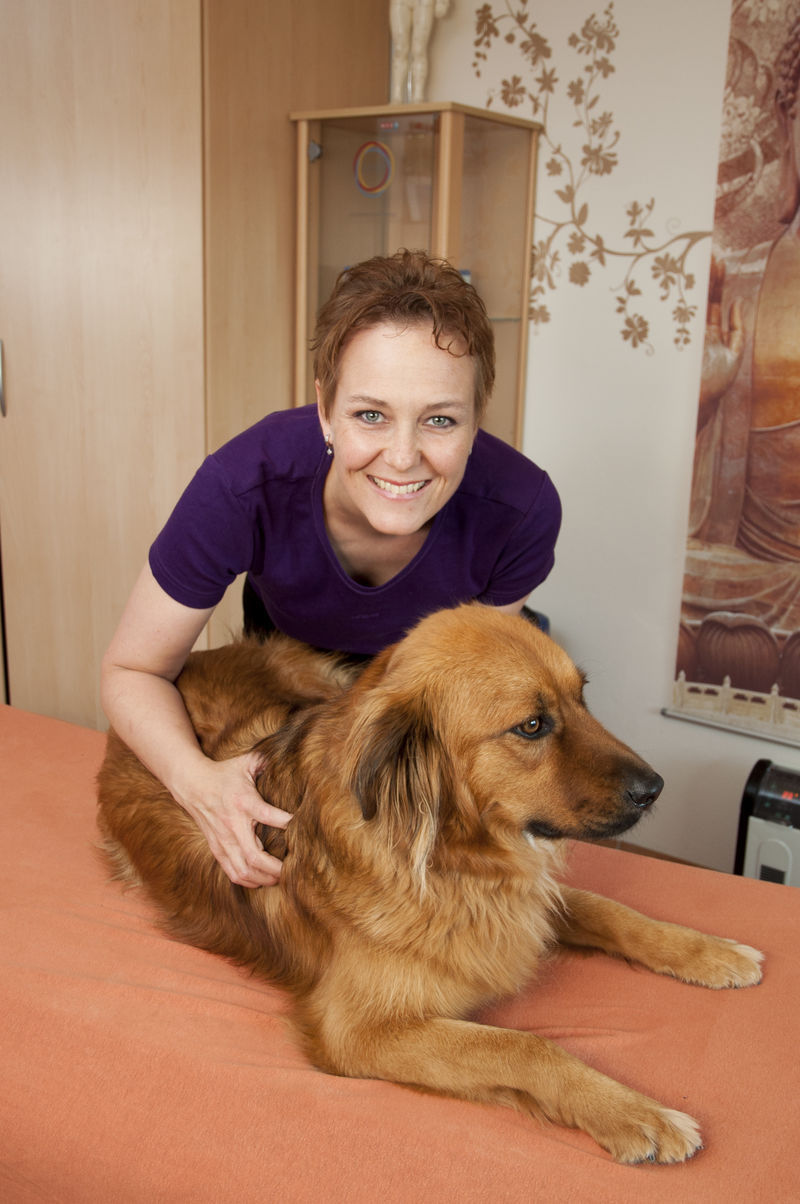 Wellnessmassage Hund