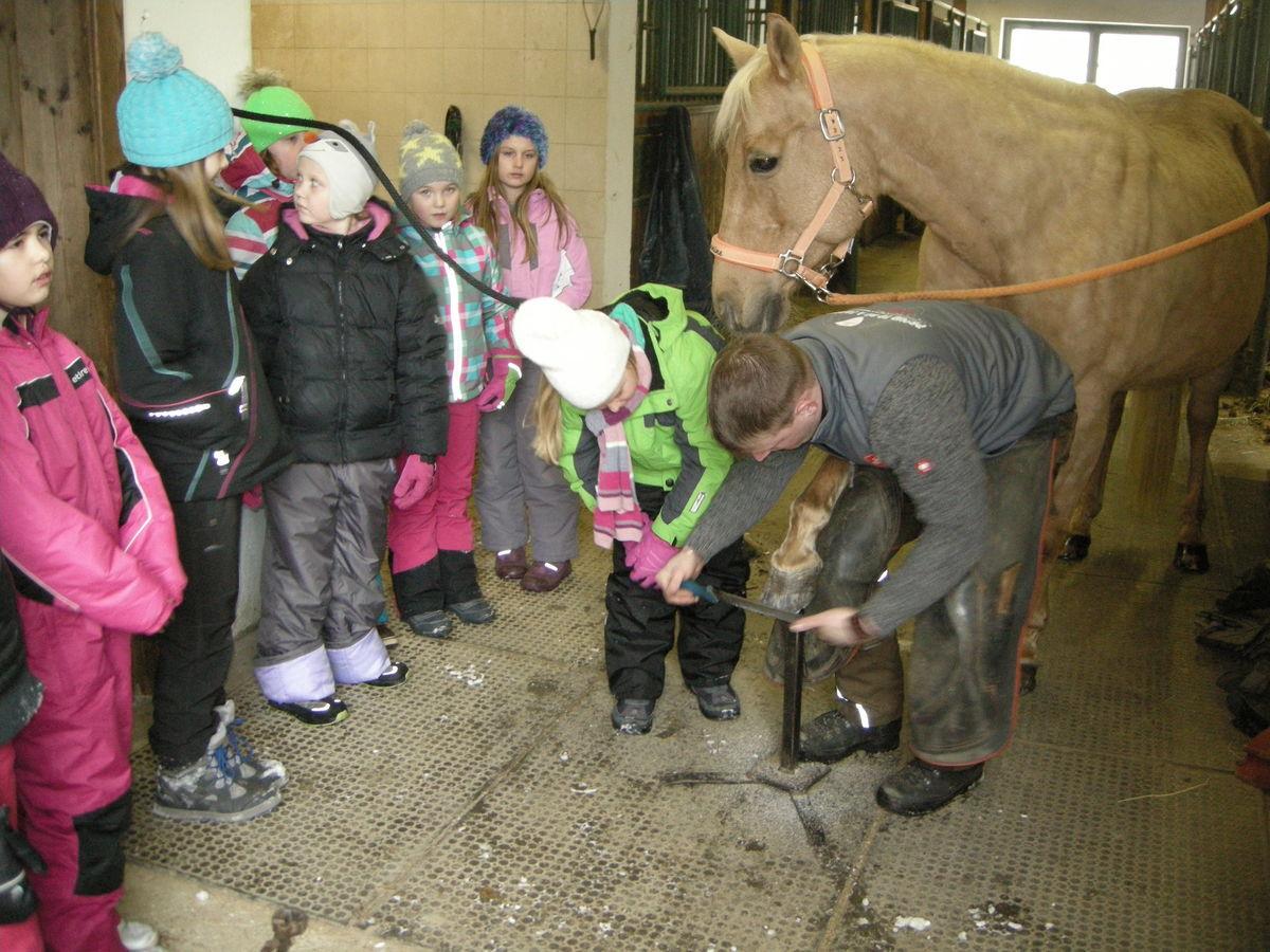 Workshop  Wir beschlagen ein Pferd